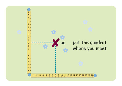 diagram showing where to place quadrat