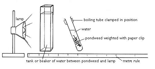 lamp, tank of water, pondweed in water in boiling tube, metre rule beneath