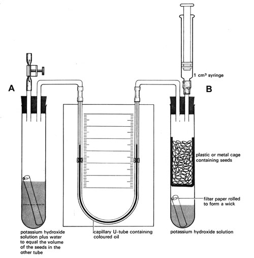 Diagram showing equipment to measure rate of respiration