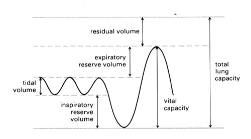 Standard trace showing how to read off residual volume, expiratory reserve volume, tidal volume, inspiratory reserve volume, vital capacity and total lung capacity